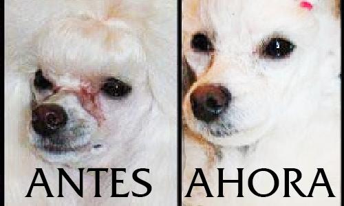 Cómo quitar las manchas de los ojos de los perros