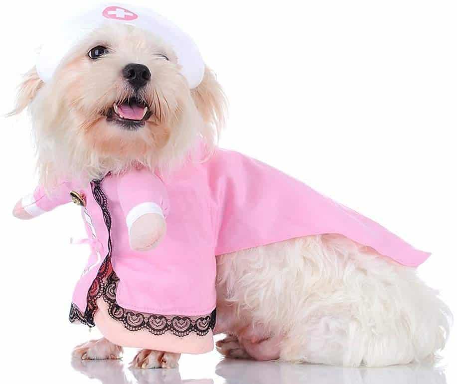 enfermera rosa perro o gato