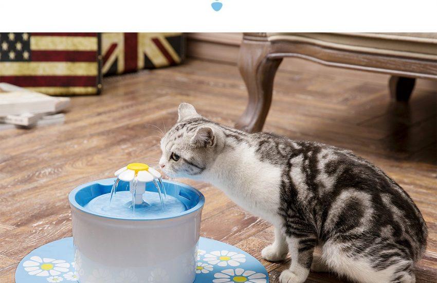 gato bebiendo agua en fuente automática de agua