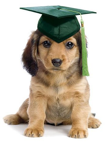 golden retriever cachorro con sombrero de graduado de color verde