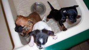 Cómo bañar a un cachorro de perro y cuándo