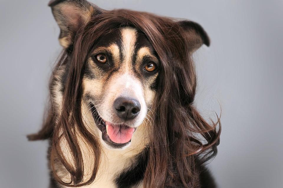 10 razas de perro que sueltan MENOS PELO