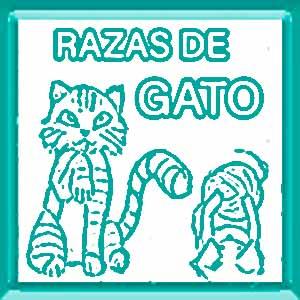 razas de gatos domesticos