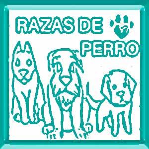 perros para peinar