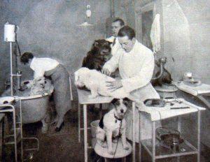 peluqueria antigua de perros