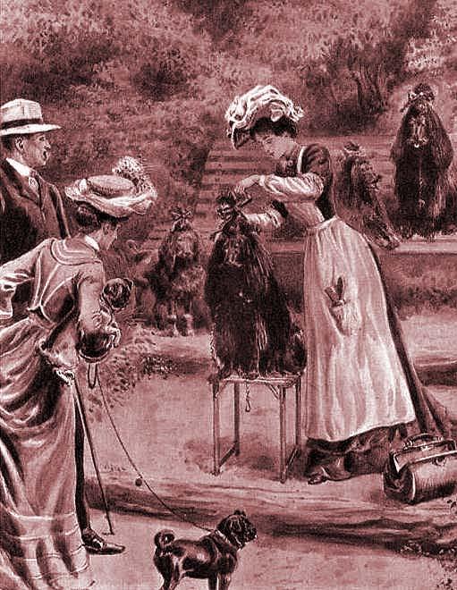 HISTORIA ¿Sabes desde cuándo se practica la peluquería canina?