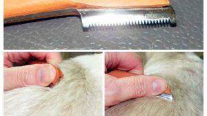Lee más sobre el artículo Que es el STRIPPING en la peluquería canina