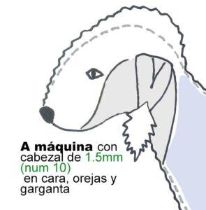 dibujo de bedlington terrier