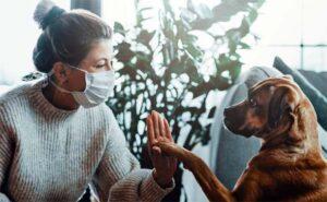 Lee más sobre el artículo El MITO de las razas de perros HIPOALERGENICAS