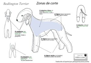 cortar pelo bedlington terrier dibujo