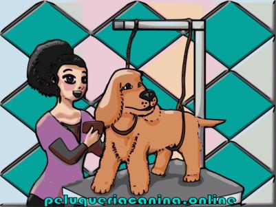 curso gratis - Los 10  pasos para aprender peluquería canina y extras