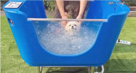 spa para perros efecto hidromasaje burbujas, jacuzzi, perro dentro