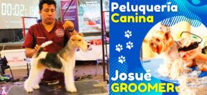 Lee más sobre el artículo Curso CON CERTIFICADO en linea de peluquería canina