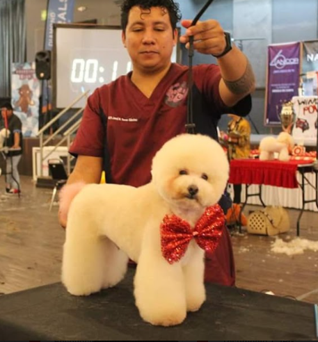 Josue con perrito en competicion, corte tipo bichón frisé