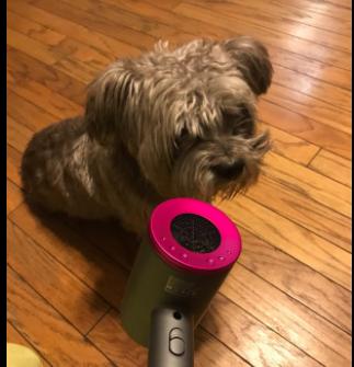 mejor secador de pelo perro sentado